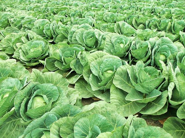 solidarische Landwirtschaft Regionale Resilienz Aachen