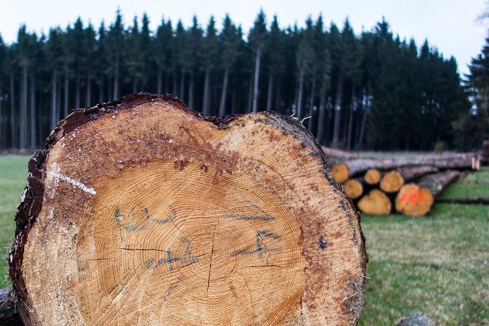 Projekt: Regionales Netzwerk für hochwertige Produkte aus heimischem Holz / Rhönholzveredler