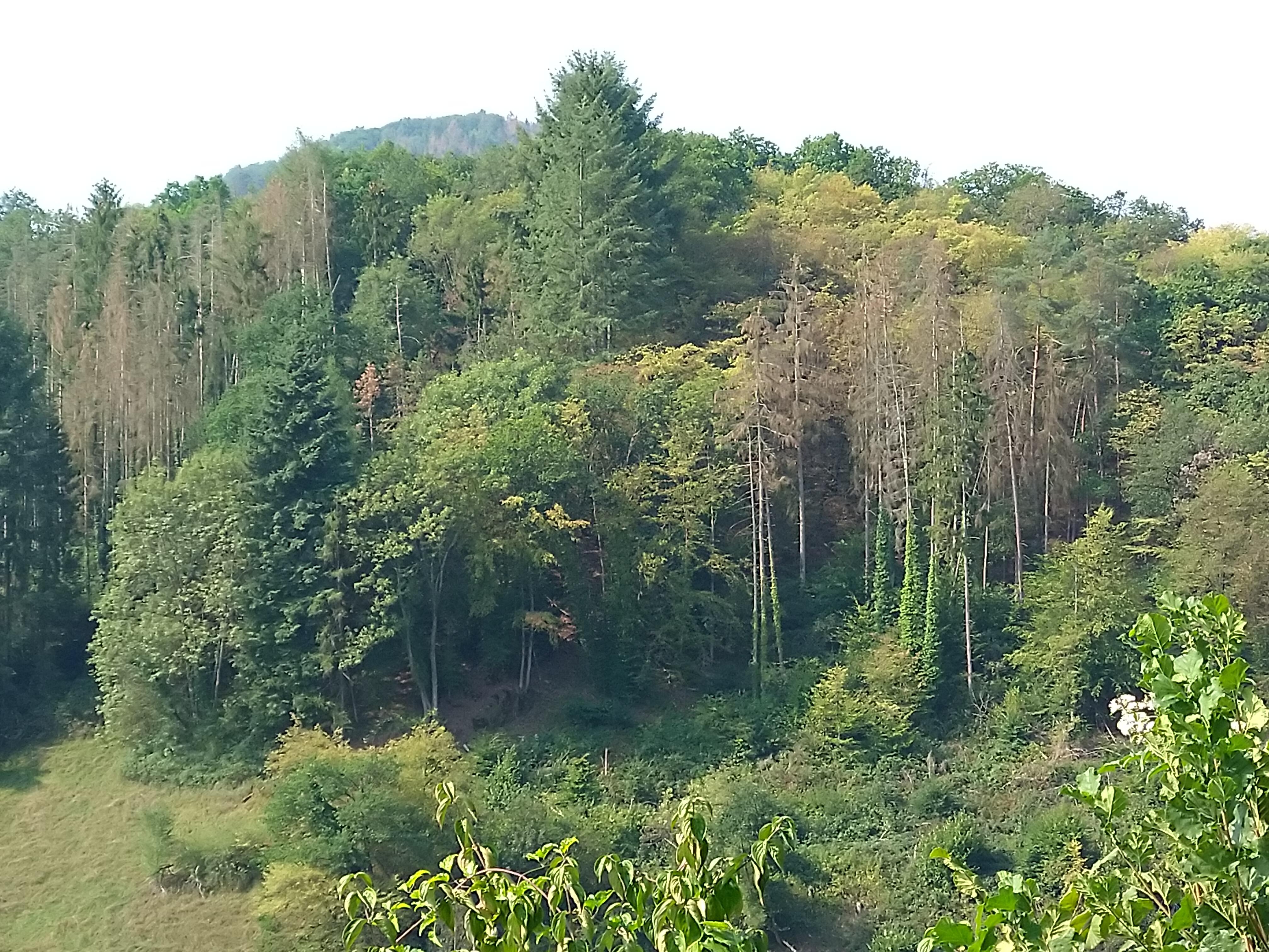 Kurz reflektiert: Unsere Wälder im Klimawandel